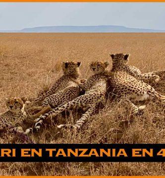 Safari en Tanzania. Tanrangire Serengueti y Ngorongoro